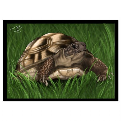 CC Greetings Card Tortoise